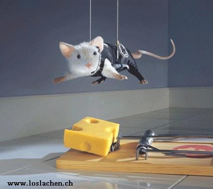http://loslachen.ch/Lustiges/Lustige%20Tiere/Tier.fj3.jpg